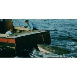 Photo Jaws / Les dents de la mer