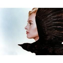 Photo Les oiseaux - The Birds